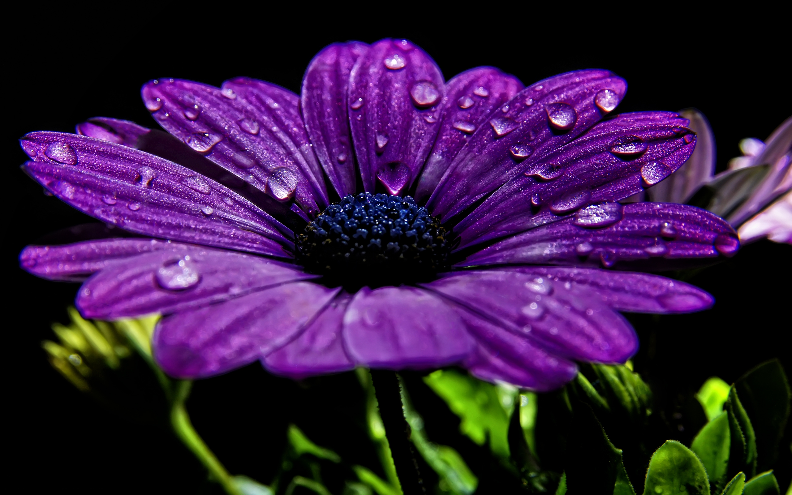 purple-flowers-wallpaper