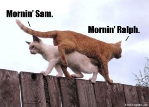 funny-cats-walking-fence